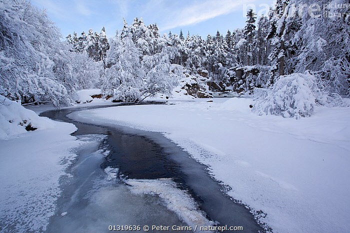 River Pattack in winter. Strathmashie Falls, Scotland, December 2009.  ,  COLD,EUROPE,HIGHLANDS,ICE,LANDSCAPES,RIVERS,SCOTLAND,SNOW,TREES,UK,WATER,WINTER,PLANTS,United Kingdom,core collection xtwox  ,  Peter Cairns