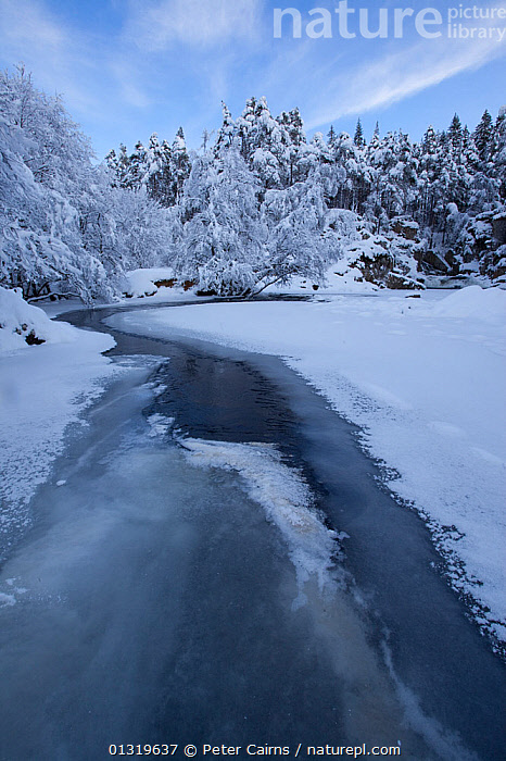 River Pattack in winter. Strathmashie Falls, Scotland, December 2009.  ,  EUROPE,HIGHLANDS,ICE,LANDSCAPES,RIVERS,SCOTLAND,SNOW,TREES,UK,VERTICAL,WATER,WINTER,PLANTS,United Kingdom,core collection xtwox  ,  Peter Cairns