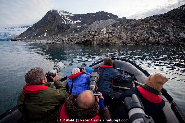 Polar Bear (Ursus maritimus) on rocky outcrop being photographed by tourists from a dinghy. Svalbard, Norway, September 2009.  ,  ABOARD,BEARS,CARNIVORES,DINGHIES,ECOTOURISM,ENDANGERED,EUROPE,INFLATABLE BOATS,MAMMALS,MARINE,MOUNTAINS,NORWAY,OCEAN,OUTDOORS,PEOPLE,PHOTOGRAPHY,SCANDINAVIA,TOURISM,VERTEBRATES,,Svalbard,Arctic,Polar,Norway  ,  Peter Cairns