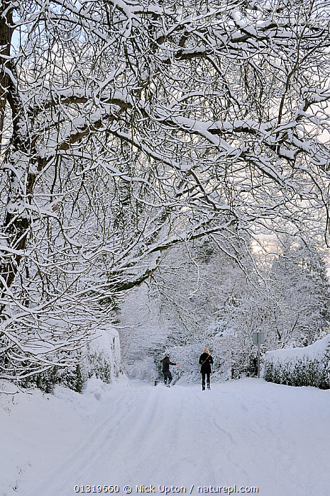 Couple walking and sliding down snow covered country lane on steep hill, Wiltshire, UK, December 2010  ,  COLD,ENGLAND,EUROPE,FROST,FROZEN,ICE,LANDSCAPES,OUTDOORS,PEOPLE,ROADS,SNOW,TREES,TWO,UK,VERTICAL,WALKING,WINTER,Weather,Plants,United Kingdom  ,  Nick Upton
