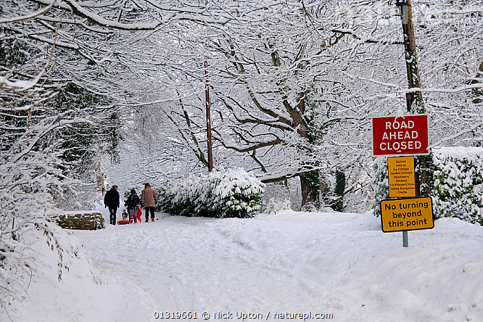 Family and dog walking on snow covered country lane, closed to traffic, Wiltshire, UK, December 2010  ,  ENGLAND,EUROPE,ICE,LANDSCAPES,outdoors,PEOPLE,ROADS,SIGNS,SNOW,TREES,UK,WALKING,WINTER,PLANTS,United Kingdom  ,  Nick Upton