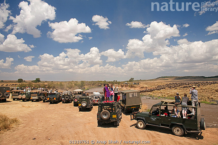 Tourist vehicles watching The Great Migration. Masai Mara National Reserve, Kenya, August 2009  ,  AFRICA,EAST AFRICA,GROUPS,MIGRATION,PEOPLE,TOURISM,TOURISTS,VEHICLES,WILDEBEEST  ,  Anup Shah