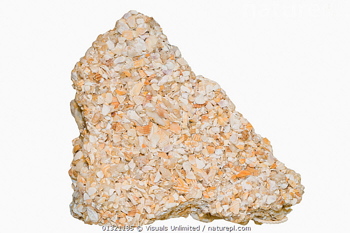 Coquina is mainly composed of shell fragments.  ,  COQUINA,FRAGMENTS,GEOLOGY,LIMESTONE,MINERALS,MULTICOLORED,NATURAL,OBJECT,PATTERN,ROCK,ROCKS,SEDIMENTARY,SHELL,SHOT,SINGLE,STUDIO,WHITE  ,  Visuals Unlimited