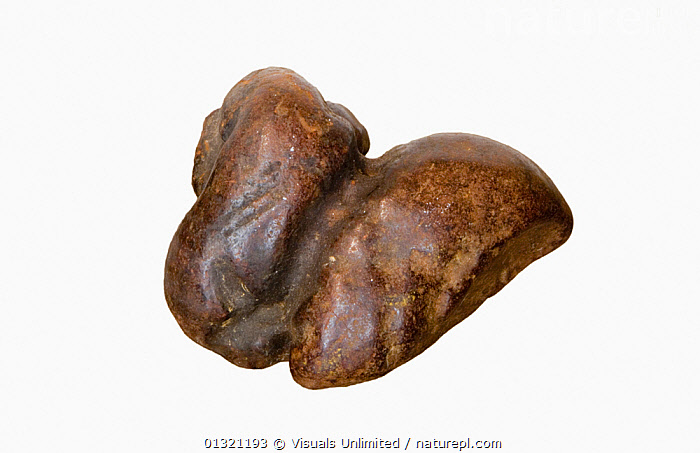 Coprolite fossilized dung  ,  ANGLE,BROWN,COPROLITE,DUNG,FOSSIL,GEOLOGY,HIGH,MINERALS,OBJECT,ROCKS,SHOT,SINGLE,SMOOTH,STUDIO,WHITE  ,  Visuals Unlimited