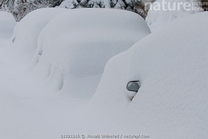 Cars buried in snow in Boulder, Colorado, USA, December 2006  ,  ADVERSITY,BLIZZARD,BURIED,CARS,COLORADO,FOUR,LANDSCAPES,OBJECTS,OUTDOORS,PROBLEM,SNOW,SNOWDRIFT,TRANSPORTATION,USA,WEATHER,WHITE,WINTER,North America  ,  Visuals Unlimited