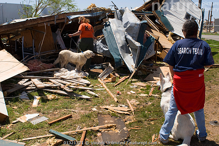 Dogs assist in search and rescue efforts after a strong tornado in Cactus, Texas, USA, April 2007  ,  ADULT,ANIMALS,APPEARANCE,CAUCASIAN,CLOTHES,DAMAGE,DEBRIS,DESTRUCTION,DISASTERS,DOG,EMERGENCIES,LANDSCAPES,MISFORTUNE,OUTDOORS,QUARTER,REAR,RESCUE,SEARCH,TEXAS,THREE,TORNADO,TWO,USA,WEATHER,WHITE,WOMEN,WORK,North America  ,  Visuals Unlimited