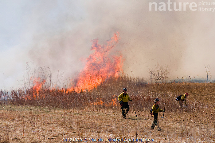 Firefighters set a controlled burn to reduce the threat of future wild fire in Boulder, Colorado, USA, March 2008  ,  ADULT,APPEARANCE,BURN,BURNING,CAUCASIAN,CONTROLLED,DRY,FIRE,FIREFIGHTER,GRASS,HEAT,LANDSCAPES,MEN,OUTDOORS,POLLUTION,SMOKE,THREE,TREES,USA,WARNING,Plants,North America  ,  Visuals Unlimited