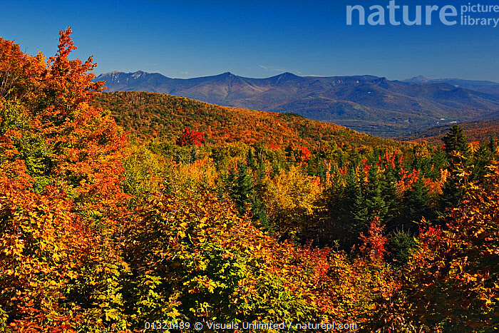 Southern Appalachian Mountains in full autumn splendour seen from the Blue Ridge Parkway near Grandfather Mountain, North Carolina, USA. October 2005  ,  APPALACHIAN,AUTUMN,BLUE,CAROLINA,FALL,FOREST,GEOLOGY,LANDSCAPE,LANDSCAPES,MOUNTAINS,NORTH,OUTDOORS,PARKWAY,RIDGE,SKY,USA,VALLEY,North America  ,  Visuals Unlimited