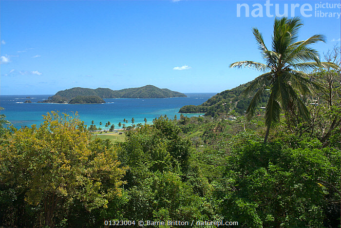 """View of Little Tobago Island. Picture taken during filming for BBC """"Life"""" TV Series, March 2008  ,  CARIBBEAN,ISLANDS,LANDSCAPES,OCEANS,PALMS,TROPICAL DRY FOREST,west indies,WEST INDIES  ,  Barrie Britton"""