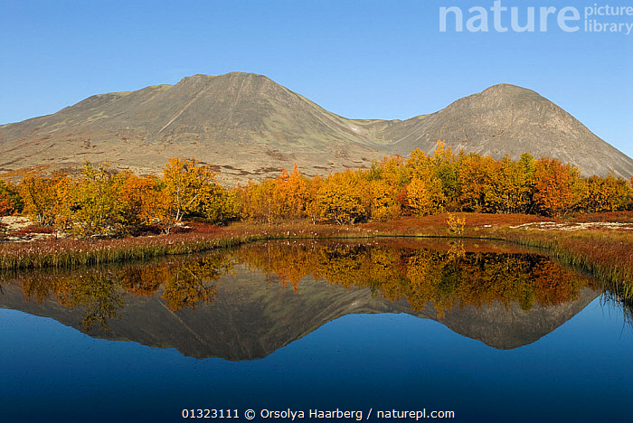 Birch trees and mountains reflected in water, autumn landscape, Rondane National Park, Oppland, Norway, September 2007  ,  AUTUMN,EUROPE,LAKES,LANDSCAPES,MOUNTAINS,NORWAY,NP,REFLECTIONS,RESERVE,SCANDINAVIA,TREES,WATER,National Park,PLANTS  ,  Orsolya Haarberg