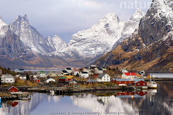Village of Reine with mountains in the background, Moskenes, Lofoten, Nordland, Norway, November 2005  ,  ARCTIC,BOATS,BUILDINGS,COASTS,EUROPE,FISHING,LANDSCAPES,MOUNTAINS,NORWAY,REFLECTIONS,SCANDINAVIA,VILLAGES,WINTER  ,  Orsolya Haarberg
