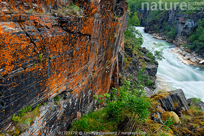 River flowing through the Abisko National Park, with coloured lichen on the rock face, Laponia, Sweden, autumn, September 2006  ,  ARCTIC,AUTUMN,EUROPE,LANDSCAPES,LAPLAND,LAPONIA,LICHENS,NP,RESERVE,RIVERS,SCANDINAVIA,SWEDEN,Plants,National Park  ,  Orsolya Haarberg
