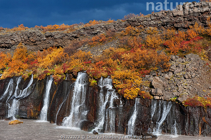The Hraunfossar waterfall in autumn, Iceland, September 2010  ,  AUTUMN,BIRCH,EUROPE,ICELAND,LANDSCAPES,PLANTS,RIVERS,WATER,WATERFALLS  ,  Orsolya Haarberg