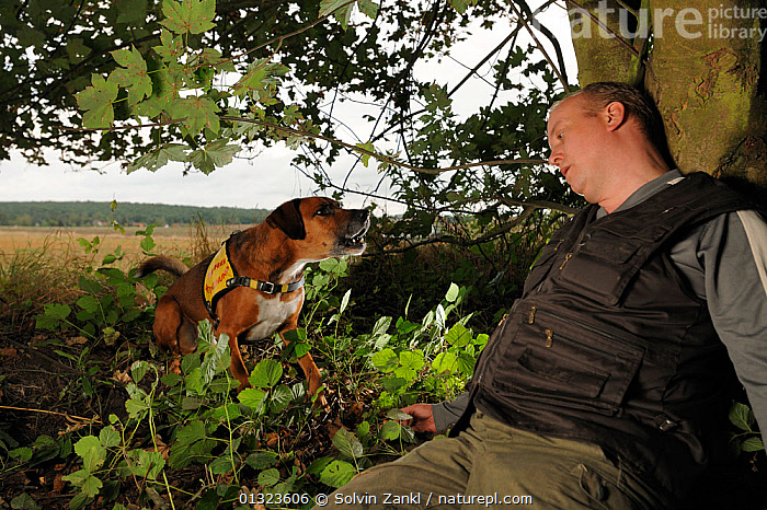 Dog working in rescue / training situation, Germany, September 2009  ,  BARKING,DOGS,LARGE DOGS,PEOPLE,PETS,RESCUE,RESCUING,VERTEBRATES,VOCALISATION,WORKING,Europe,Canids  ,  Solvin Zankl