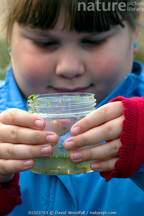 Primary school pupil observing pond life as part of field studies, Newport Wetlands NNR, Gwent, Wales, UK, October 2012  ,  CAUCASIAN,CONSERVATION,EDUCATION,ESTUARIES,EUROPE,GIRLS,NATURE CHILDREN,OUTDOORS,PEOPLE,PONDS,PORTRAITS,RESERVES,RIVERS,TIDAL,UK,WALES,WATER,United Kingdom  ,  David Woodfall