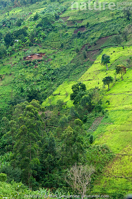 Aerial view of farmland on the edge of Bwindi Impenetrable Forest, Uganda, East Africa, October 2008  ,  AERIALS,AFRICA,AGRICULTURE,BUILDINGS,DEFORESTATION,EAST AFRICA,FARMLAND,LANDSCAPES,UGANDA,VERTICAL  ,  Mark Carwardine