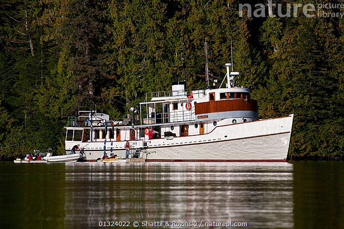 Ecotourism boat, the Seawolf, anchored off the Great Bear Rainforest, British Columbia, Canada, September 2010  ,  BOATS,CANADA,COASTS,ECOTOURISM,MIXED BOATS,MOTORBOATS,OUTDOORS,PEOPLE,PROFILE,TENDERS,TOURISM,WORKING BOATS,North America,OPEN-BOATS  ,  Shattil & Rozinski