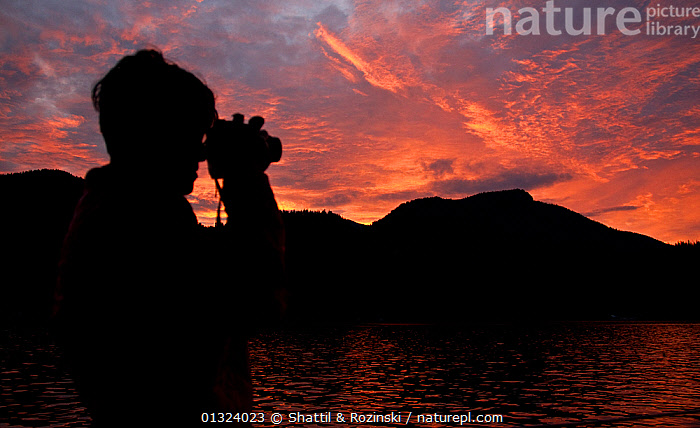 Silhouette of ecotourist using binonculars at sunrise, Great Bear Rainforest, British Columbia, Canada, September 2010  ,  CANADA,COASTS,DAWN,ORANGE,OUTDOORS,PEOPLE,RESERVE,SILHOUETTES,TOURISM,North America,core collection xtwox  ,  Shattil & Rozinski