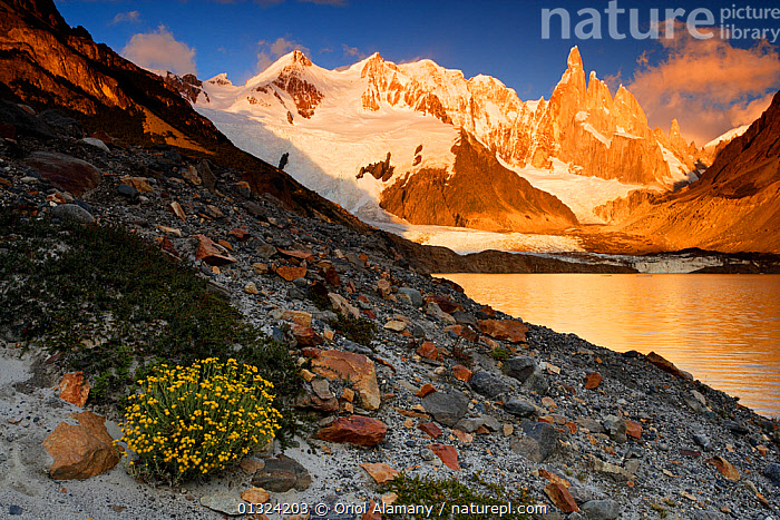 Laguna Torre and Grande glacier below Cerro Torre (3102 m) at dawn, Los Glaciares National Park, Andes, Patagonia, Argentina, January 2006  ,  ARGENTINA,FLOWERS,GLACIERS,HABITAT,LAKES,LANDSCAPES,MOUNTAINS,NP,PLANTS,RESERVE,SNOW,SOUTH AMERICA,SUNRISE,Geology,National Park  ,  Oriol Alamany