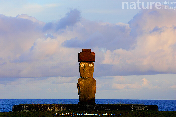 Moai statue standing erect at the restored archaeological site of Ahu Ko Te Riku in Hanga Roa, Easter Island (Pascua or Rapa Nui), Unesco World Heritage Site, November 2004  ,  ANCIENT,ARTEFACTS,CULTURES,DAWN,EYES,LANDSCAPES,OCEANIA,PACIFIC ISLANDS,POLYNESIA,RESERVE,SCULPTURE,STATUE,STONE,SUNRISE  ,  Oriol Alamany