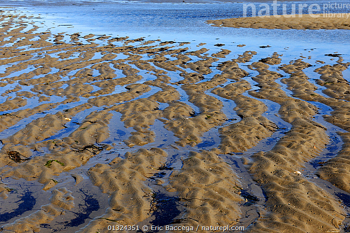 Sand banks at outgoing tide, Saint Louis Lagoon, Kouchibouguac National Park, New Brunswick, Canada, September  ,  ARTY SHOTS,CANADA,LAKES,LITTORAL,NORTH AMERICA,NP,PATTERNS,WATER,WETLANDS,Intertidal,National Park  ,  Eric Baccega