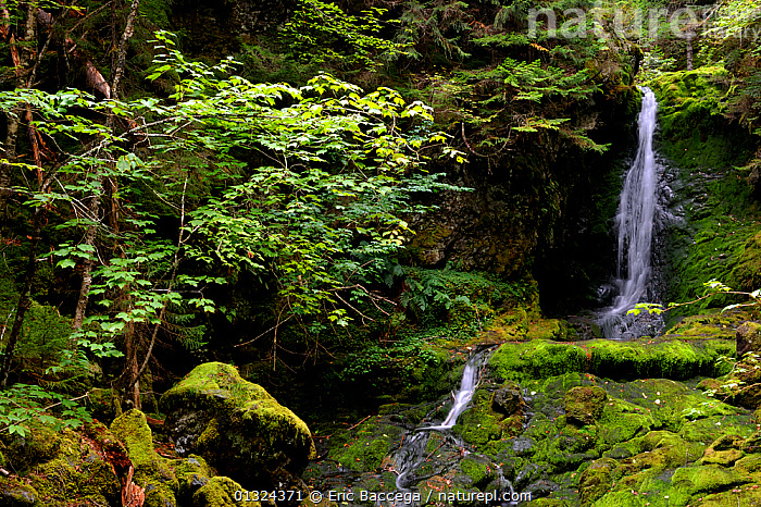 Dickson falls, Fundy National Park, Bay of Fundy, New Brunswick, Canada, September 2010  ,  CANADA,FORESTS,LANDSCAPES,NORTH AMERICA,NP,RIVERS,VEGETATION,WATERFALLS,WOODLANDS,National Park  ,  Eric Baccega