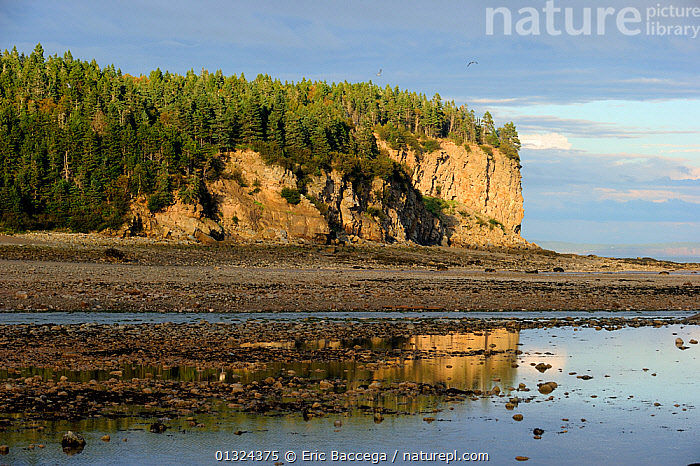 Upper Salmon river at outgoing tide, Bay of Fundy shores at Alma, New Brunswick, Canada, September 2010  ,  ATLANTIC,ATMOSPHERIC,CANADA,CLIFFS,CLOUDS,COASTS,EROSION,FORESTS,LANDSCAPES,LITTORAL,LOW TIDE,NORTH AMERICA,NP,OCEAN,RIVERS,SKY,WATER,Geology,Weather,Intertidal,National Park  ,  Eric Baccega