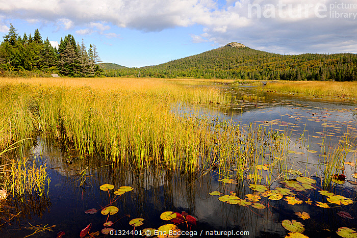 Marsh swamp in Newfoundland Island, Canada, September 2010  ,  AUTUMN,CANADA,CLOUDS,LANDSCAPES,MARSHES,NORTH AMERICA,NP,NYMPHAEACAE,WATER,WATER LILY,Weather,Wetlands,National Park  ,  Eric Baccega