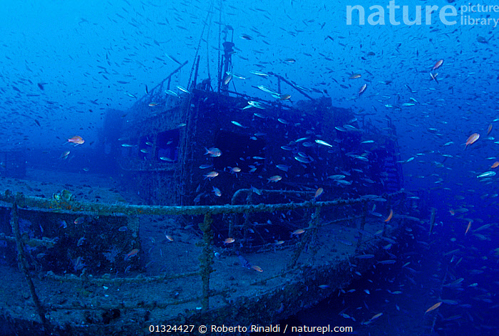 """The quarter deck of crude oil super-tanker """"Amoco Milford Haven"""", populated by fish. The tanker sank on April 14th, 1991 after three days of fire. Genoa, Italy, 2007.  ,  ATMOSPHERIC,BOATS,EUROPE,FISH,HISTORICAL,ITALY,MARINE,MEDITERRANEAN,OIL,OIL TANKERS,TANKERS,TEMPERATE,UNDERWATER,WRECKS,WORKING-BOATS ,core collection xtwox  ,  Roberto Rinaldi"""