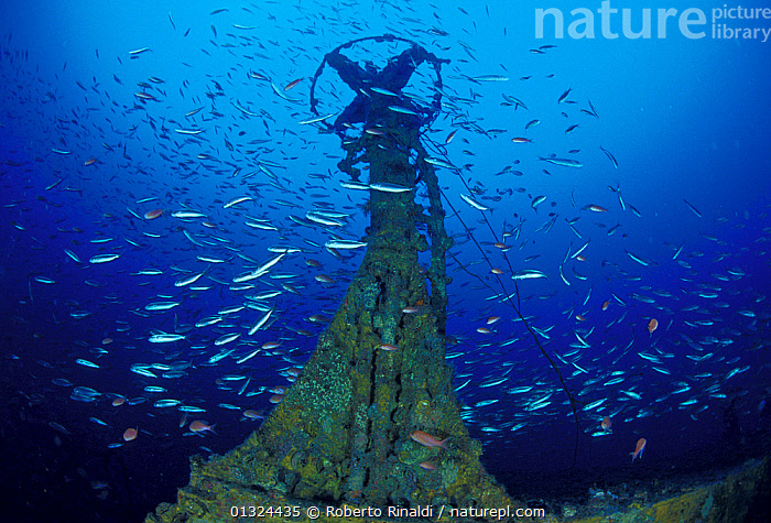 """Structure on wreck of crude oil super-tanker """"Amoco Milford Haven"""", surrounded by Swallowtail anthias (Anthias anthias) and Bogues (Boops boops) at 50m. The tanker sank on April 14th, 1991 after three days of fire. Genoa, Italy, 2007.  ,  ANTHIAS,BOAT PARTS,BOATS,BREAM,EUROPE,FISH,HISTORICAL,ITALY,LOW ANGLE SHOT,MARINE,MEDITERRANEAN,OIL TANKERS,TANKERS,TEMPERATE,UNDERWATER,WRECKS,WORKING-BOATS ,core collection xtwox  ,  Roberto Rinaldi"""