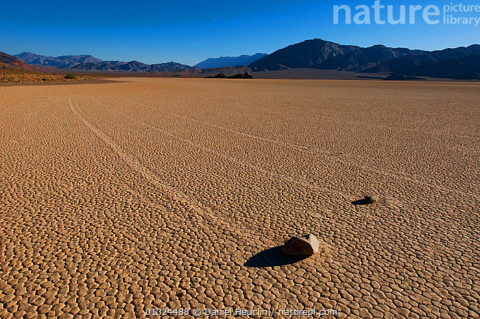 Moving rocks in Racetracks valley, Dry mud lake. Death valley National Park. California, USA, August 2009  ,  DESERTS,GEOLOGICAL ATTRACTION,GEOLOGY,LANDSCAPES,MOVING,NORTH AMERICA,NP,ROCKS,USA,National Park  ,  Daniel Heuclin