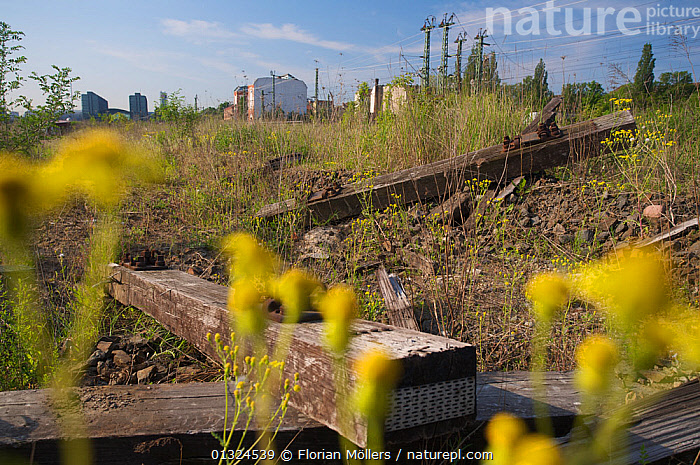 Vegetation on urban waste land close to Berlin central station, Berlin, Germany, May 2008  ,  CITIES,EUROPE,GERMANY,HABITAT,LANDSCAPES,PLANTS,RAILWAYS,URBAN  ,  Florian Möllers