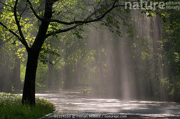Heavy rain falling on trees and path in the Tiergarten, Berlin, Germany, April 2009  ,  EUROPE,GERMANY,LANDSCAPES,PARKLAND,RAIN,RAINING,ROADS,WATER,WEATHER,WOODLANDS  ,  Florian Möllers