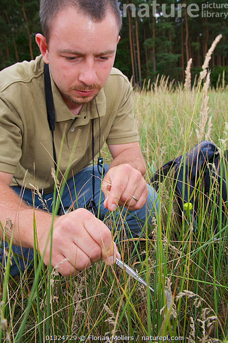 Entomologist making field observations at Tegel airport, Berlin, Germany, July 2008  ,  CONSERVATION,EUROPE,GERMANY,INSECTS,INVERTEBRATES,MAN,OUTDOORS,PEOPLE,RESEARCH,URBAN,VERTICAL  ,  Florian Möllers