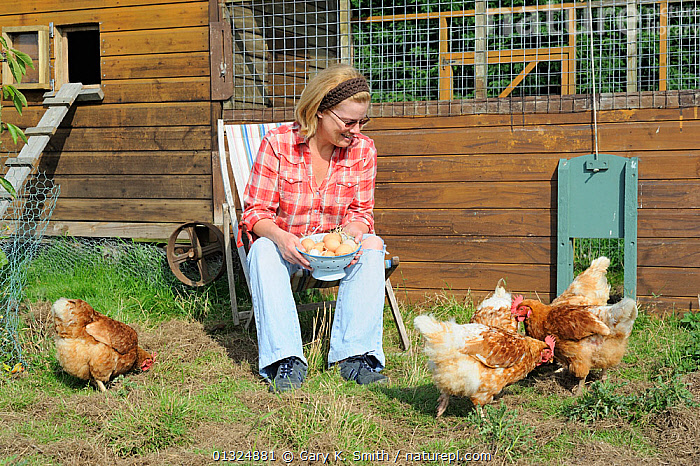 Woman with basket of eggs, looking at her rescued ex-battery hens (Gallus gallus domesticus) Norfolk, UK, September  ,  BIRDS,CHICKENS,EGGS,ENGLAND,FOWL,GARDENS,HEN,HENS,LAYING,PEOPLE,POULTRY,UK,WOMAN,Europe,United Kingdom  ,  Gary K. Smith