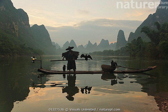 Traditional fisherman with his Cormorants on the Li River at twilight, Guilin, China, ASIA,BIRD,BLACK,BOAT,BOATS,CHINA,COLOR,CORMORANT,DAWN,DUSK,EVENING,FISHERMEN,FISHING,FISHING BOATS,GUILIN,HORIZONTAL,IMAGE,KARST,LANDSCAPES,LANTERN,LI,MORNING,ONE,OUTDOORS,PERSON,REFLECTION,RIVER,SILHOUETTE,SPACE,STANDING,SUNRISE,SUNSET,TRADITIONAL,TWILIGHT,UNRECOGNIZABLE,WORKING BOATS, Visuals Unlimited
