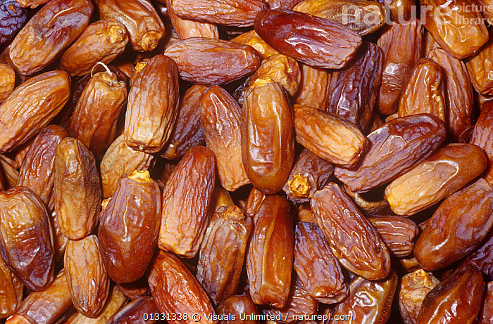 Dates variety Deglet Noor (Phoenix dactylifera) from North Africa.  ,  CLOSE,CROPS,DACTYLIFERA,DATE,EATING,FRAME,FRUIT,GROUPS,HEALTHY,LARGE,OBJECTS,PATTERNS,PHOENIX,SHOT,STUDIO,Plants  ,  Visuals Unlimited