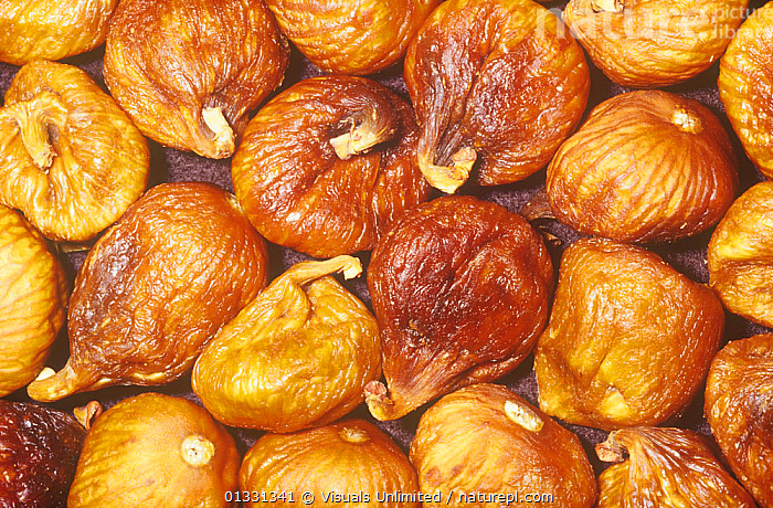 Fig variety Calimyrna, white, dried (Ficus carica) from Western Asia.  ,  CALIMYRNA,CARICA,CLOSE,CROPS,EATING,FICUS,FIG,FIGS,FRUIT,GROUPS,HEALTHY,LARGE,OBJECTS,PATTERNS,SHOT,STUDIO,Plants  ,  Visuals Unlimited