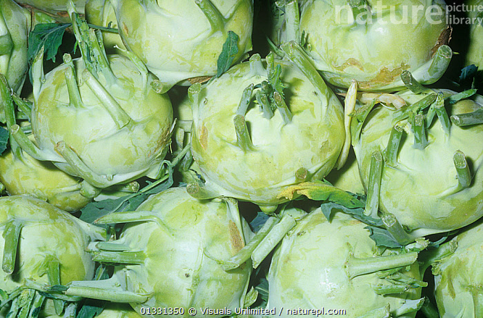 Kohlrabi (Brassica oleriaceae gongylodes)  ,  BRASSICA,CLOSE,CROPS,DIRECTLY,EATING,FRAME,GONGYLODES,GROUPS,HEALTHY,KOHLRABI,MEDIUM,OBJECTS,OLERIACEAE,PATTERNS,PLANTS,ROOT,SHOT,STUDIO,VEGETABLE,VEGETABLES  ,  Visuals Unlimited