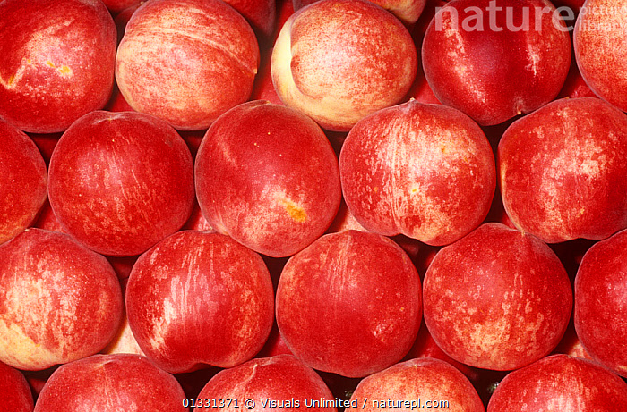 Peach variety White Flesh (Prunus persica)  ,  CLOSE,CROPS,DIRECTLY,EATING,FLESH,FRAME,FRUIT,GROUPS,HEALTHY,LARGE,OBJECTS,PATTERNS,PEACH,PEACHES,PERSICA,PRUNUS,SHOT,STUDIO,WHITE,Plants  ,  Visuals Unlimited