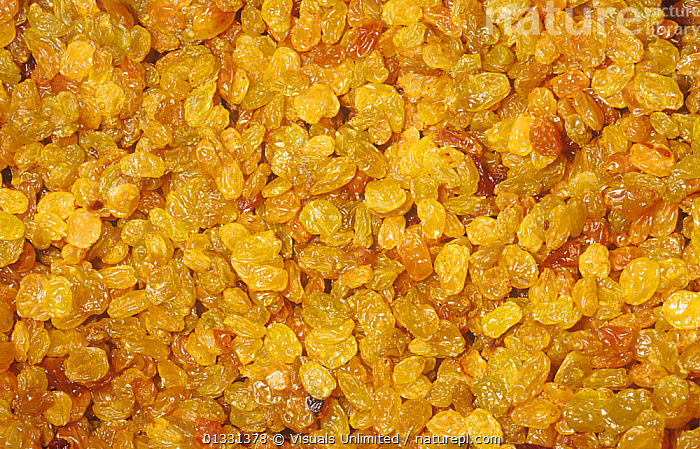 Golden Raisins are dried Grapes (Vitis sp)  ,  CLOSE,CROPS,DIRECTLY,EATING,FRAME,FRUIT,GOLDEN,GRAPE,GROUPS,HEALTHY,LARGE,OBJECTS,PATTERNS,RAISIN,SEED,SHOT,STUDIO,VITIS,YELLOW,Plants  ,  Visuals Unlimited