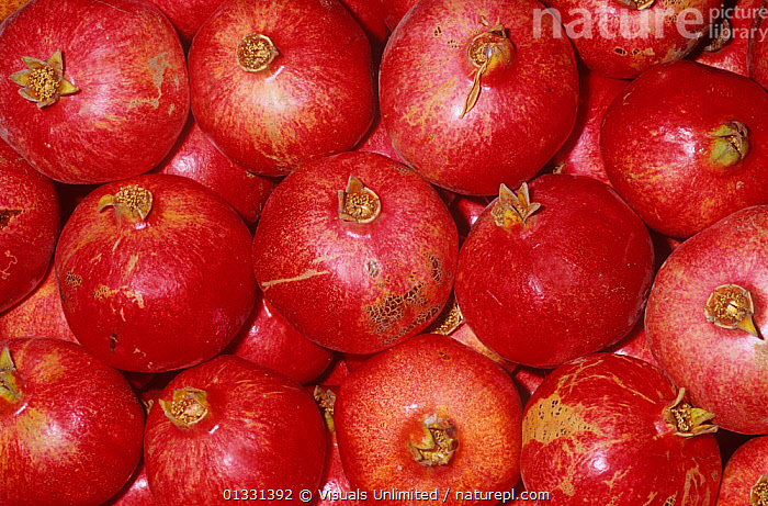 Pomegranate (Punica granatum)  ,  CLOSE,CROPS,DIRECTLY,EATING,FRAME,FRUIT,GRANATUM,GROUPS,HEALTHY,LARGE,OBJECTS,PATTERNS,POMEGRANATE,POMEGRANATES,PUNICA,RED,SHOT,STUDIO,Plants  ,  Visuals Unlimited