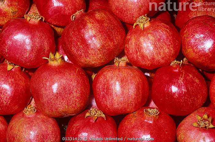 Pomegranate (Punica granatum)  ,  BACKGROUNDS,CLOSE,CROPS,EATING,FRAME,FRUIT,GRANATUM,GROUPS,HEALTHY,LARGE,OBJECTS,PATTERNS,POMEGRANATE,POMEGRANATES,PUNICA,RED,SHOT,STUDIO,Plants  ,  Visuals Unlimited