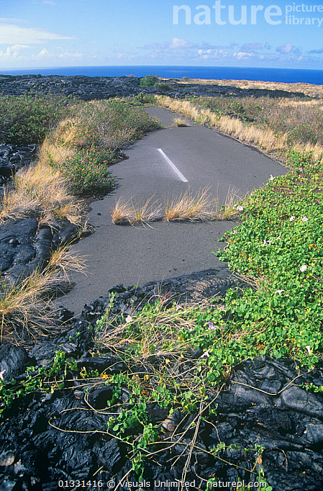 Aerial view of lava covering Chain of Craters Road, Hawaii Volcanoes National Park, Hawaii, USA.  ,  BLUE,DESTINATION,GEOLOGY,GROWING,GROWTH,HAWAII,LANDSCAPES,LAVA,NATIONAL,OUTDOORS,PARK,PLANTS,ROAD,ROADS,SKY,SUCCESSION,TRAVEL,USA,VACATION,VERTICAL,VOLCANOES,Concepts,North America  ,  Visuals Unlimited