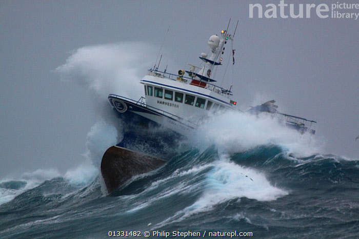 """Fishing vessel """"Harvester"""" powering through huge waves while operating in the North Sea. Europe, January 2009. Property released.  ,  adversity,BOATS,BOWS,catalogue3,commercial fishing,crashing,EUROPE,EXTREME,fishing boat,fishing industry,FISHING BOATS,HEAVY SEAS,January,Nobody,North Sea,north sea,outdoors,overcast,risks,rough sea,SKY,SPRAY,STORMS,transportation,TRAWLERS,view to sea,water spray,water vehicle,WAVES,WEATHER,WINTER,WORKING BOATS,BOAT-PARTS,WORKING-BOATS  ,  Philip Stephen"""