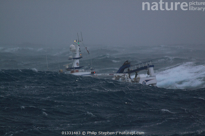 """Huge wave obscuring fishing vessel """"Harvester"""" while operating in the North Sea. Europe, January 2009. Property released.  ,  BOATS,DANGEROUS,EUROPE,EXTREME,FISHING BOATS,HEAVY SEAS,NORTH SEA,OBSCURED,STORMS,TRAWLERS,WAVES,WEATHER,WORKING BOATS  ,  Philip Stephen"""