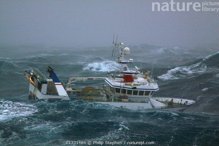"""Trawler """"Harvester"""" in heavy seas while operating in the North Sea. Europe, January 2009. Property released.  ,  BOATS,DANGEROUS,EUROPE,EXTREME,FISHING BOATS,HEAVY SEAS,NORTH SEA,OBSCURED,PROFILE,STORMS,TRAWLERS,WAVES,WEATHER,WORKING BOATS  ,  Philip Stephen"""