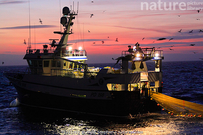 """Fishing vessel """"Ocean Harvest"""" dragging her nets on the North Sea. Europe, January 2011. Property released.  ,  BIRDS,BOATS,COMMERCIAL,DUSK,EUROPE,FISHING,FISHING BOATS,LIGHTS,NET,NETS,NIGHT,NORTH SEA,PROFILE,SEABIRDS,SUNSET,TRAWLERS,WORKING BOATS  ,  Philip Stephen"""