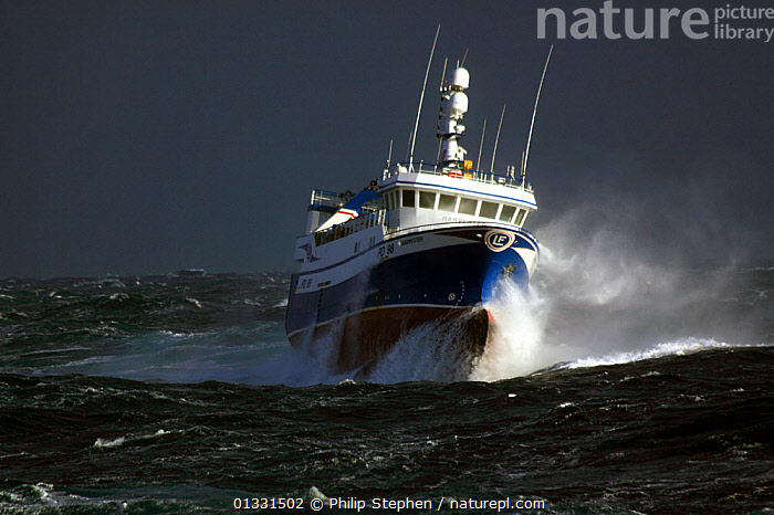 "Fishing vessel ""Harvester"" powering through stormy seas. North Sea, Europe, February 2011. Property released.  ,  BOATS,EUROPE,FISHING BOATS,FRONT VIEWS,HEAVY SEAS,NORTH SEA,SPRAY,STORMS,TRAWLERS,WEATHER,WORKING BOATS  ,  Philip Stephen"