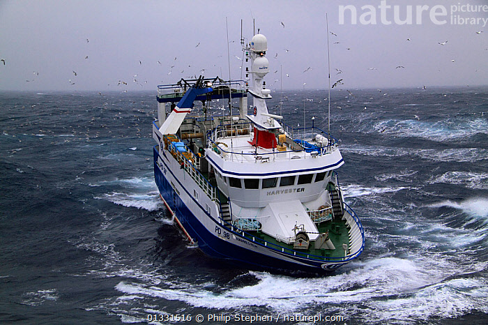 """Fishing vessel """"Harvester"""" working on the North Sea. Europe, February 2011. Property released.  ,  BOATS,CHOPPY,EUROPE,FISHING BOATS,FRONT VIEWS,NORTH SEA,NOSE DIVING,TRAWLERS,WORKING BOATS  ,  Philip Stephen"""